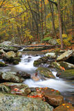 Creek During Fall Stock Image