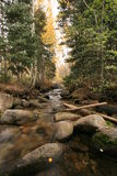 Creek in fall with aspens #2. Aspen grove glowing in the backlight in bells canyon utah wide angle view with creek Stock Image