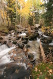 Creek in fall with aspens #5 Royalty Free Stock Photo