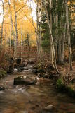 Creek in fall with aspens and bridge. Aspen grove glowing in the backlight in bells canyon utah wide angle view with creek and bridge Royalty Free Stock Image