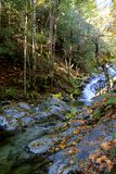Creek in the fall Stock Photo