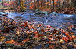 Creek In Fall Season. Indian Run Creek, Pennsylvania in Autumn stock photos