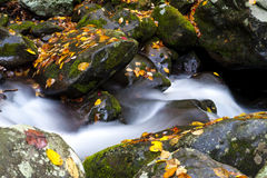 Creek in Fall. A creek in fall in the Smoky Mountain National Park Stock Image