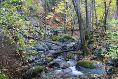 Creek in the fall Stock Photography