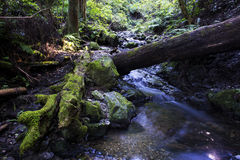 Creek and fallen tree covered with moss Royalty Free Stock Photography