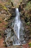 Creek Finsterbach,Carinthia,Austria Royalty Free Stock Photos