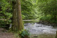 A creek is floating throuh a green forest stock image