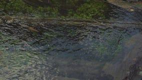 Creek flow, clean water bottom plants woods closeup. 4k stock video