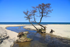 Creek flowing into the Baltic Sea. Spring seascape - creek flowing into the Baltic Sea Stock Images