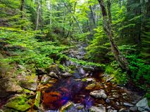 Creek Through Dense Forest, Green Mountains Vermont Royalty Free Stock Photo
