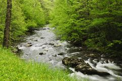 Creek flowing through forest Stock Images