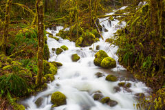 Creek Flowing Through Forest Stock Image