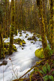 Creek Flowing Through Forest Royalty Free Stock Photography