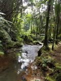 The Creek Flowing Through the Forest. Big Island, Papikou, Hawaii Stock Photography