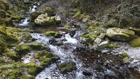 Creek flowing Royalty Free Stock Image