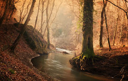 Creek. Flowing stream in autumn forest Stock Photos