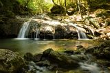 The Creek flows in a forest Stock Image