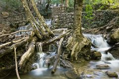 The Creek flows in a forest Royalty Free Stock Images