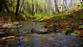 The creek flows through a sunny autumn birch forest. Peace, tranquility, harmony. The brook flows through a sunny autumn birch forest. Pure spring water running stock video