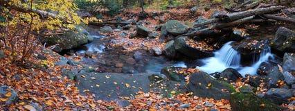 Creek foliage panorama Royalty Free Stock Photos