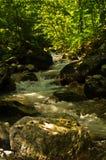 Creek at the foot of Tara mountain and national park Royalty Free Stock Photo