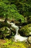 Creek at the foot of Tara mountain and national park Stock Photos