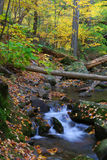 Creek in forest Stock Photography