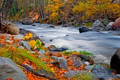 Creek in the forest. In Autumn Royalty Free Stock Photos