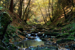 Creek in the forest. A tranquil mountain creek in a forest in autumn stock photography