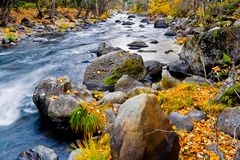 Creek in the forest in autumn royalty free stock image