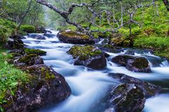 Creek in forest Stock Images