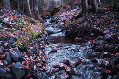 Creek in the forest. Beautiful picture of creek in Norwegian autumn forest stock images