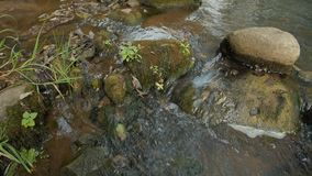 Creek in a Forest - A clear creek in a forest. stock footage