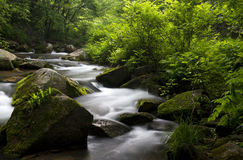 Creek in the forest. Creek deep in the forest. Shooting in China Jilin Jiaohe Lujiaogou Scenic Area Royalty Free Stock Photos