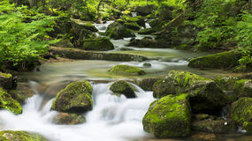 Creek in the forest. Creek deep in the forest. Shooting in China Jilin Jiaohe Lujiaogou Scenic Area Stock Photography