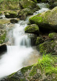 Creek in the forest Royalty Free Stock Photography