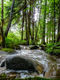 Creek in the forest with a dynamic water. Stock Images