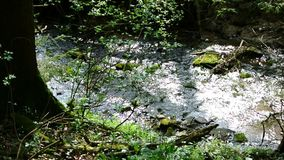 Creek in a forest in Germany stock footage
