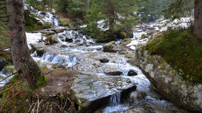 Creek in forest Royalty Free Stock Image