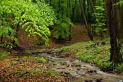 Creek in Forest. Little Brook in Forest with Stump Wood Stock Image