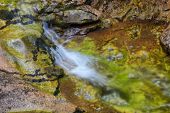 Creek in forest - long exposure Royalty Free Stock Photo