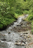 Creek in forest. By Mittersill (Alps, Austria) at summer time Royalty Free Stock Photo