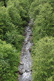 Creek in forest. By Mittersill (Alps, Austria) at summer time Stock Photography