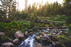 Creek in Forest Stock Photos