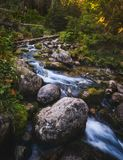 Creek in Forest Royalty Free Stock Photos