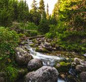 Creek in Forest Stock Image