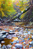 Creek and forest in the mountains Royalty Free Stock Image