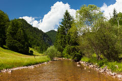 Creek, forest and mountains Stock Photos