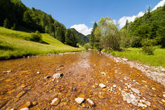 Creek, forest and mountains Stock Photography