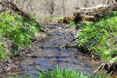 Creek in a forest Royalty Free Stock Image